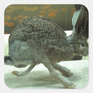 Hare (non-Krishna) running. Taxidermy specimen. Square Sticker