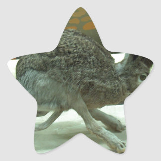 Hare (non-Krishna) running. Taxidermy specimen. Star Sticker