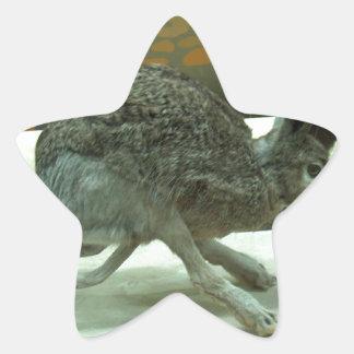 Hare (non-Krishna) running. Taxidermy specimen. Star Sticker