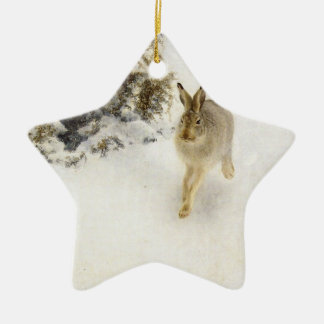 Hare of winter