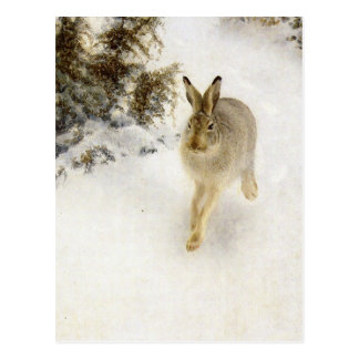Hare of winter postcard