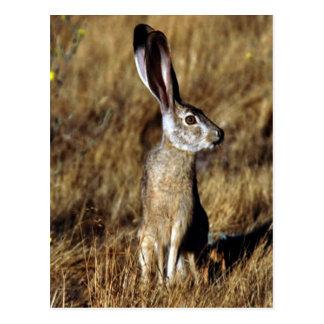 Hare Raising Postcard