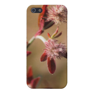 hare s foot trefoil red leaves 2 iPhone 5 cases