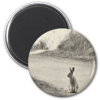 Hare today 2 inch round magnet