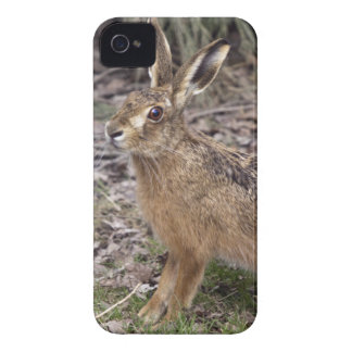 Hare Today, Gone Tomorrow iPhone 4 Case-Mate Case