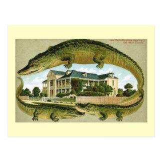 Hargrove Seminary, Key West, Florida Vintage Postcard