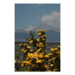 Harison's Yellow Rose and Mt. Lindsey Poster