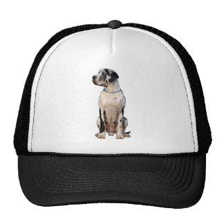 Harlekin Great Dane Trucker Hat