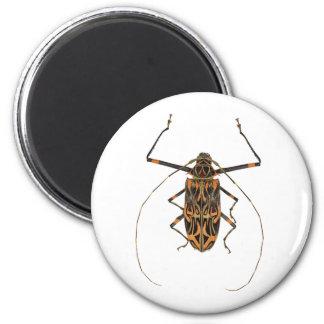 Harlequin Beetle Acrocinus Longimanus 2 Inch Round Magnet