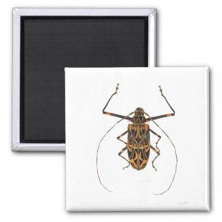 Harlequin Beetle Acrocinus Longimanus 2 Inch Square Magnet