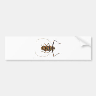 Harlequin Beetle Acrocinus Longimanus Bumper Sticker