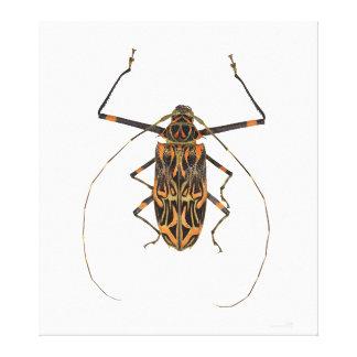 Harlequin Beetle Acrocinus Longimanus Canvas Print