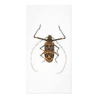 Harlequin Beetle Acrocinus Longimanus Card