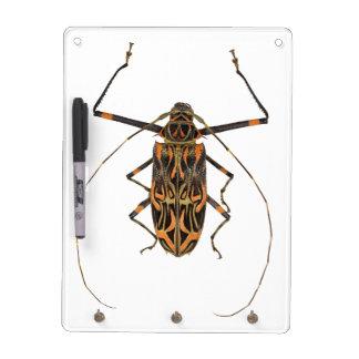 Harlequin Beetle Acrocinus Longimanus Dry Erase Whiteboards