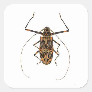 Harlequin Beetle Acrocinus Longimanus Square Sticker