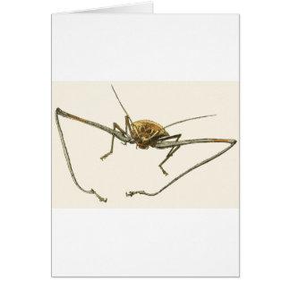 Harlequin Beetle Card