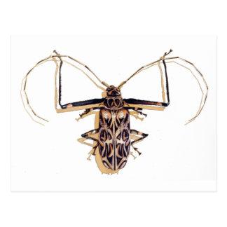 """Harlequin beetle"" Insect Watercolor Bug Postcard"