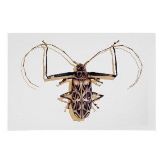 """Harlequin beetle"" Insect Watercolor Bug Poster"