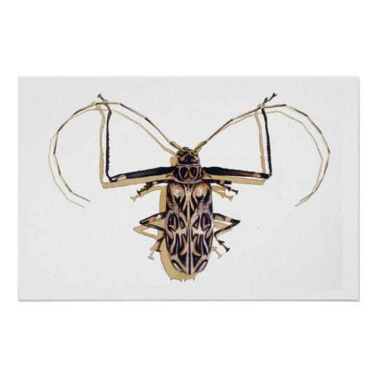 """""""Harlequin beetle"""" Insect Watercolor Bug Poster"""
