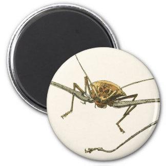 Harlequin Beetle Magnet