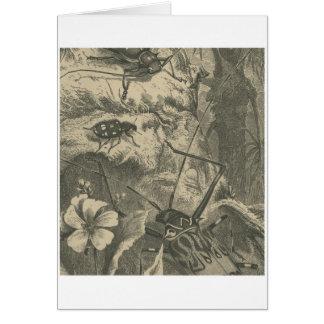 Harlequin Beetles Card
