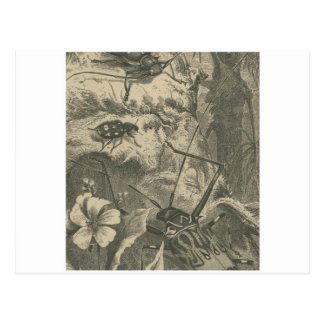 Harlequin Beetles Postcard