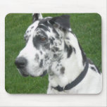 Harlequin Dane Mouse Pads