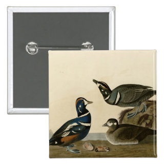 Harlequin Duck 2 Inch Square Button