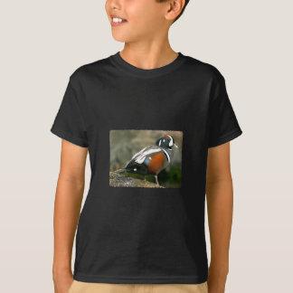 Harlequin Duck (drake) T-Shirt