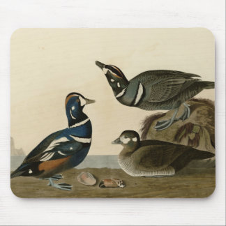 Harlequin Duck Mouse Pad