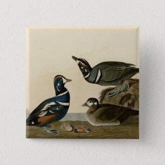 Harlequin Duck Pinback Button