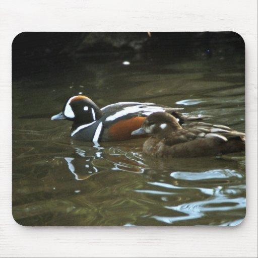 Harlequin Ducks Mouse Pad
