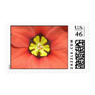 Harlequin Flower Stamp