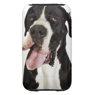 Harlequin Great Dane, close-up on white Tough iPhone 3 Case