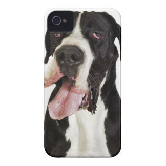 Harlequin Great Dane, close-up on white iPhone 4 Cover