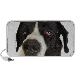 Harlequin Great Dane, close-up on white iPhone Speaker