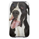 Harlequin Great Dane, close-up on white Tough iPhone 3 Cases