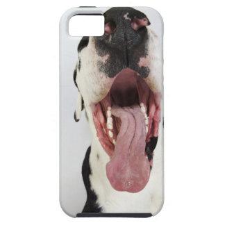 Harlequin great dane con la boca abierta primer iPhone 5 cárcasas
