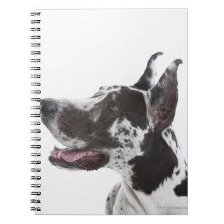 Harlequin great dane cuaderno
