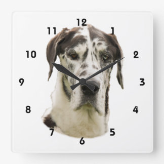 Harlequin Great Dane dog photo Square Wall Clocks