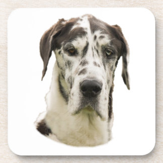 Harlequin Great Dane dog photo Drink Coasters