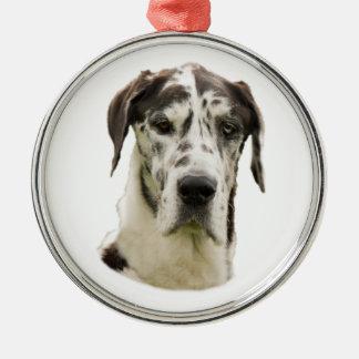 Harlequin Great Dane dog photo Metal Ornament