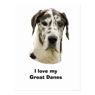 Harlequin Great Dane photo Postcard