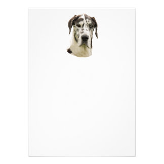 Harlequin Great Dane Portrait Photo Custom Announcement