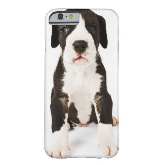 Harlequin Great Dane puppy on white background Barely There iPhone 6 Case