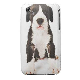 Harlequin Great Dane puppy on white background Case-Mate iPhone 3 Cases