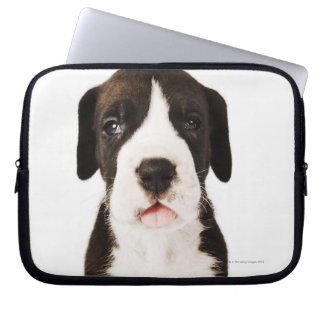 Harlequin Great Dane puppy on white background Laptop Computer Sleeves
