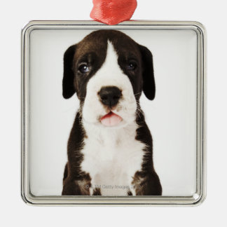 Harlequin Great Dane puppy on white background Metal Ornament