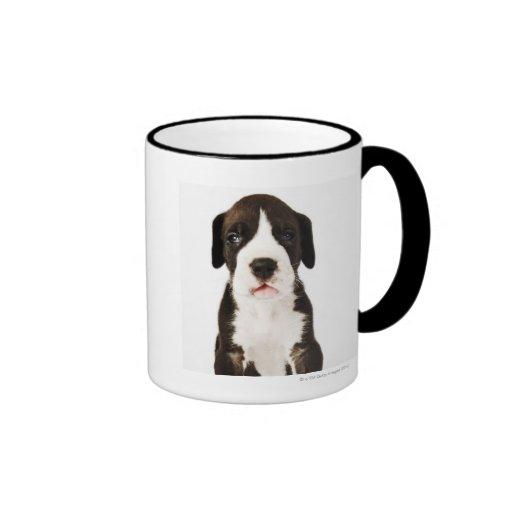 Harlequin Great Dane puppy on white background Coffee Mugs