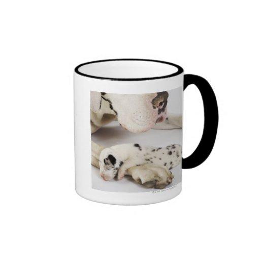 Harlequin Great Dane puppy sleeping on mother Coffee Mugs